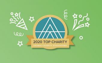 Fundacja Alberta Schweitzera ztytułem TOP CHARITY 2020