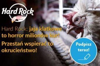 Koniec jaj klatkowych wHard Rock – podpisz petycję