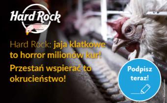 Fundacja Alberta Schweitzera wkampanii przeciwko sieci Hard Rock