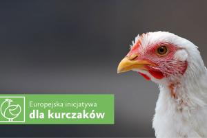 Europejska inicjatywa dla kurczaków